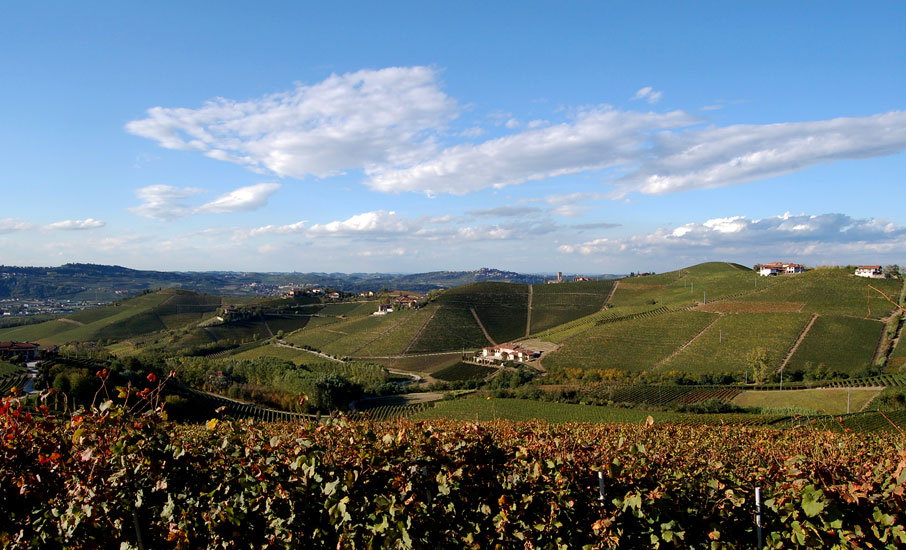 BARBARESCO DOCG FOTO